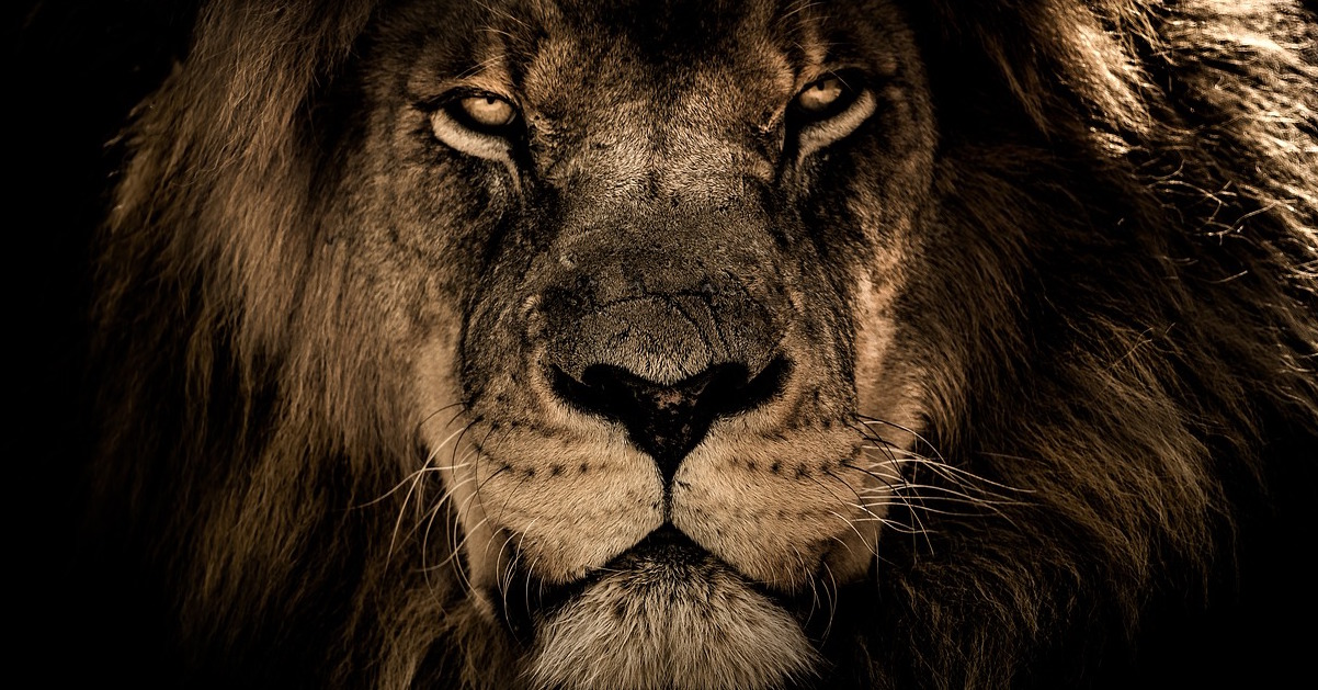 lion courage bold